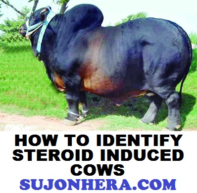 5 Tips To Identify Steroid Drug Induced Healthy Cows