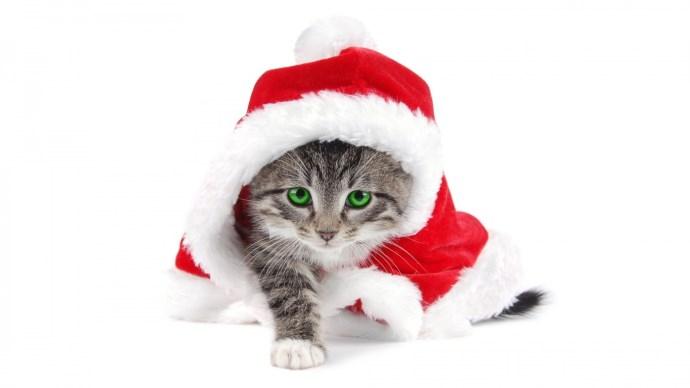 Merry Christmas HD Photo Desktop Wallpaper